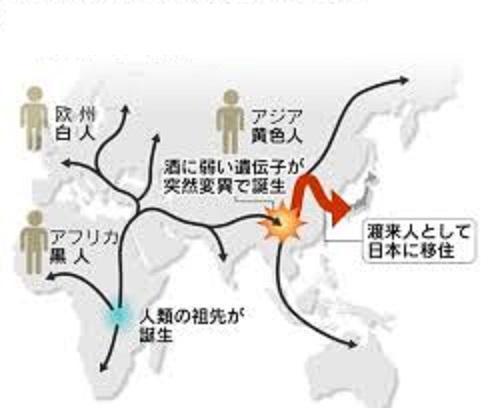 日本列島に稲作を持った人たちが酒に弱い遺伝子タイプも持ち込んだ可能性を示す図