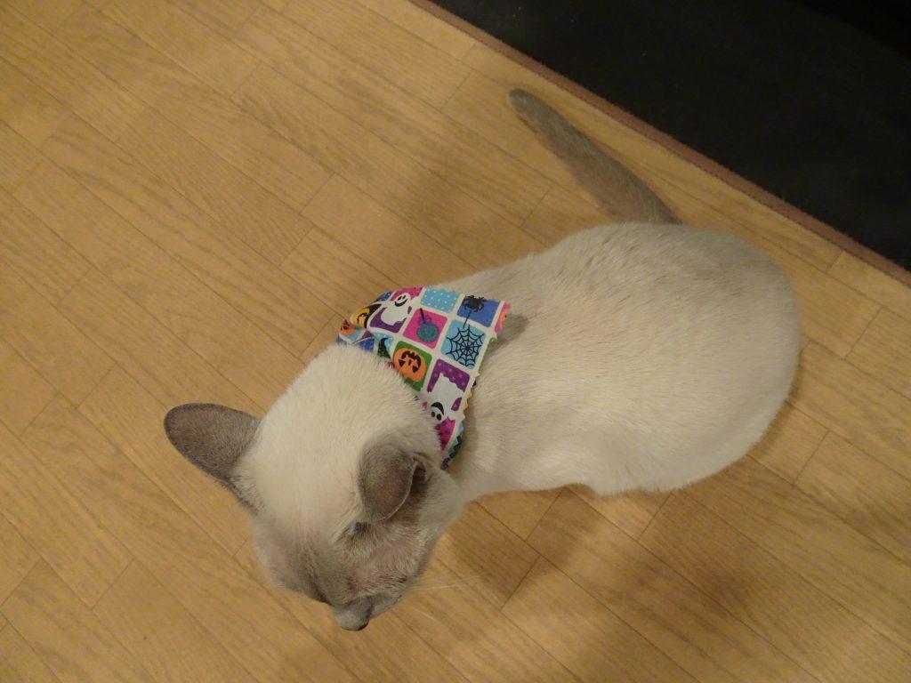 スカーフをして満足そうな楓