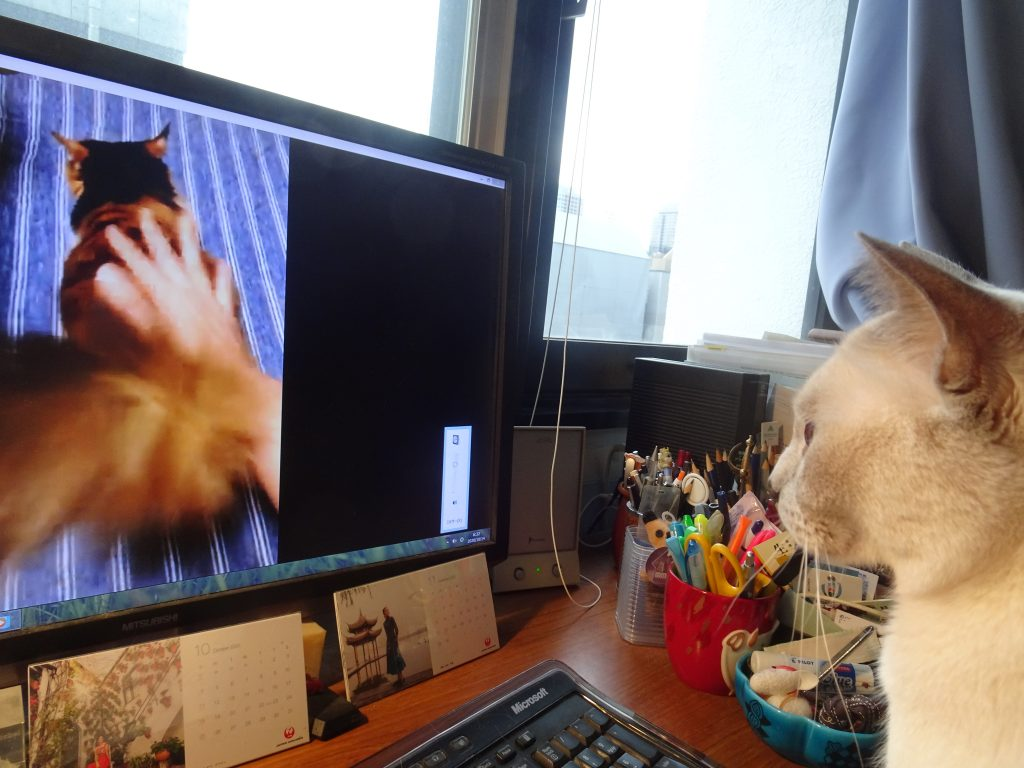 動画を見る楓・その2
