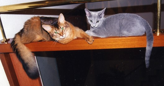子猫の頃のローズとデイジー