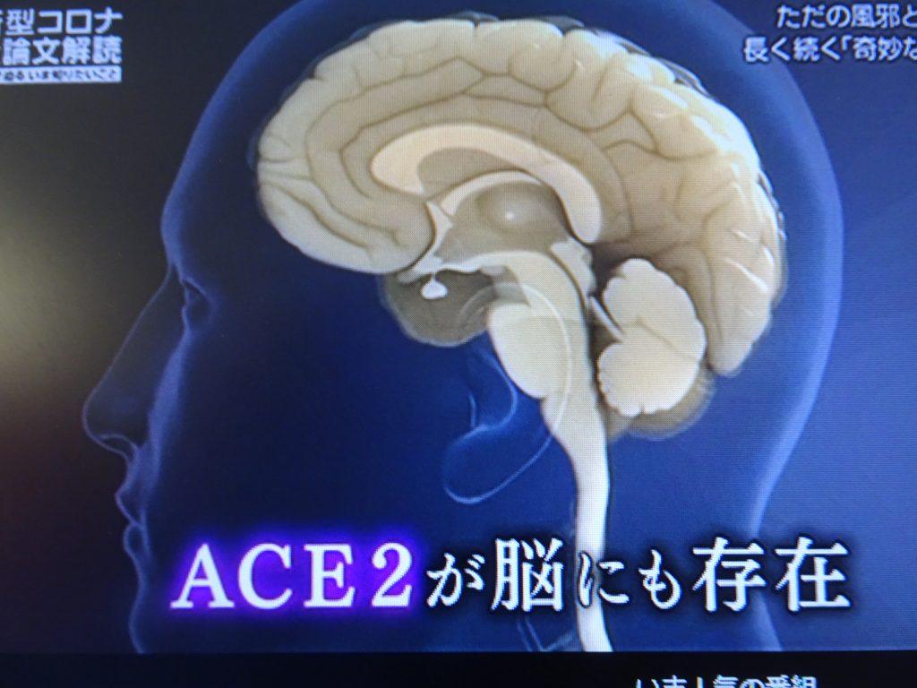 脳にACE2が発現していることを示す図