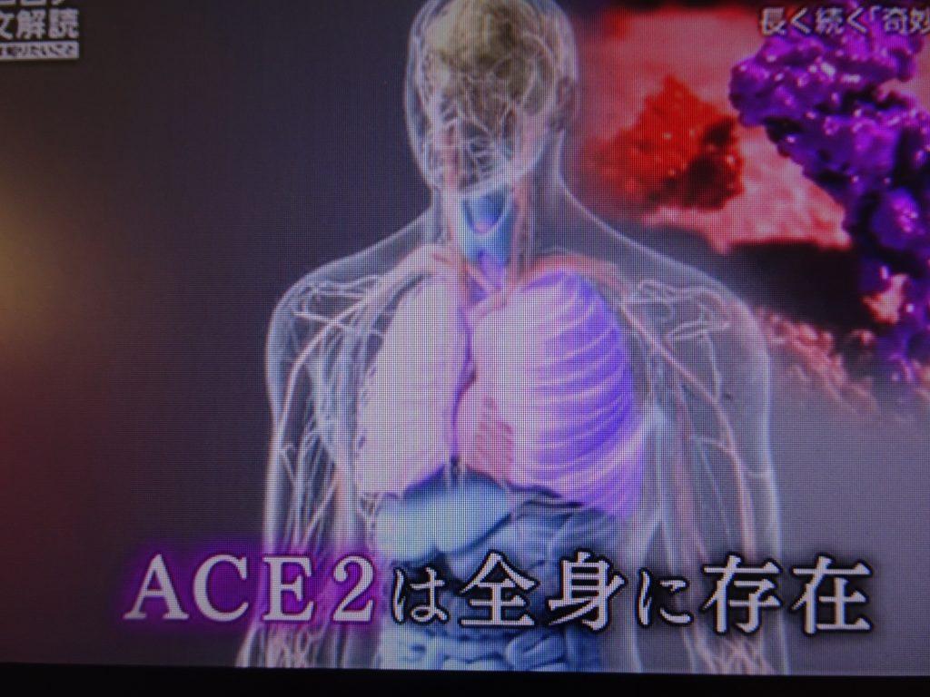 ACE2が全身に存在することを示す図