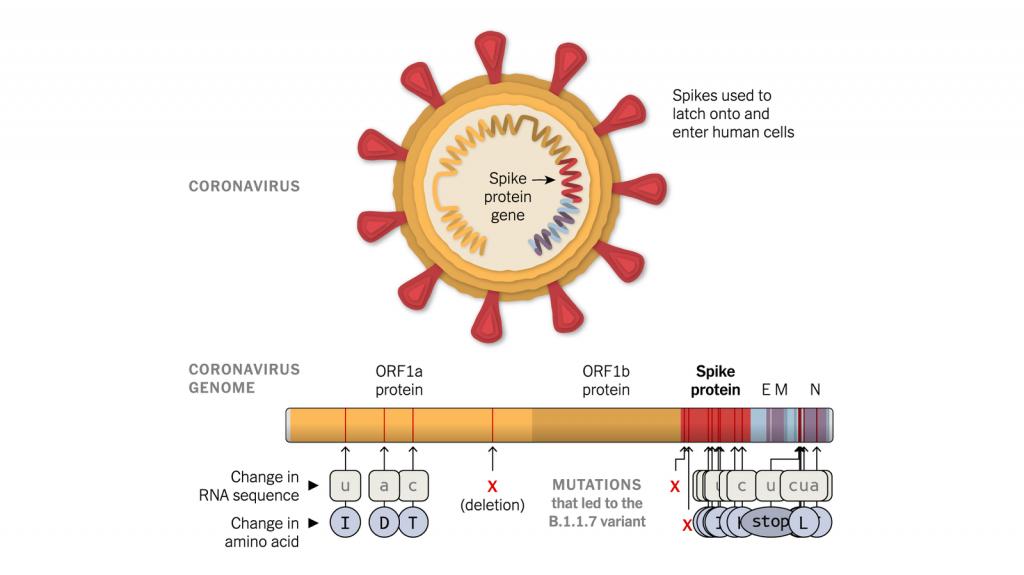スパイクタンパクで見られる変異を示す図