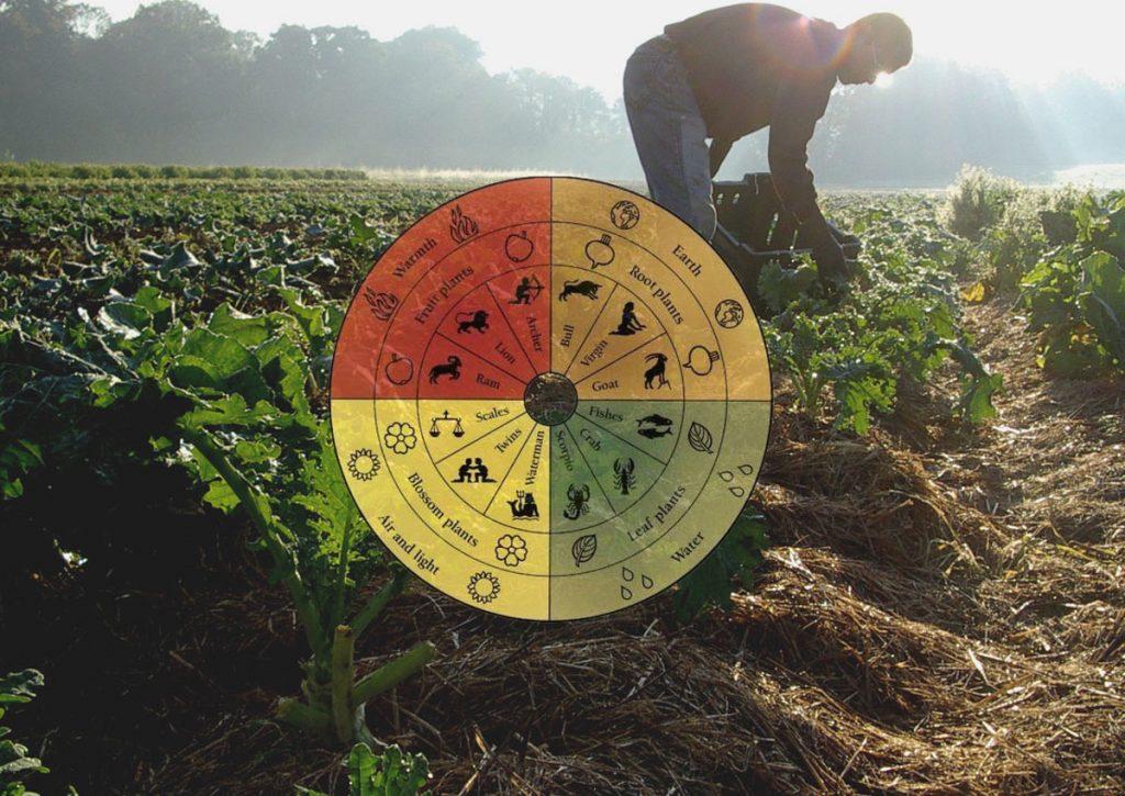 ビオディナミ農法で畑を耕す人