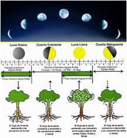 月の満ち欠けや宇宙のリズムと収穫との関係を示した図