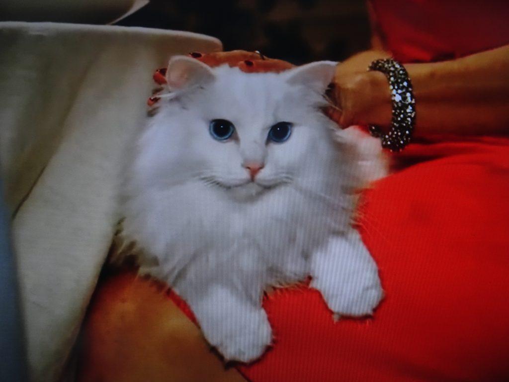 満足した表情を見せるネコ