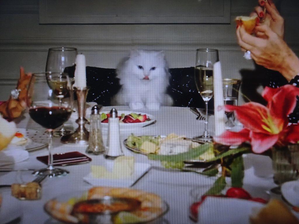 主賓席に座るネコ