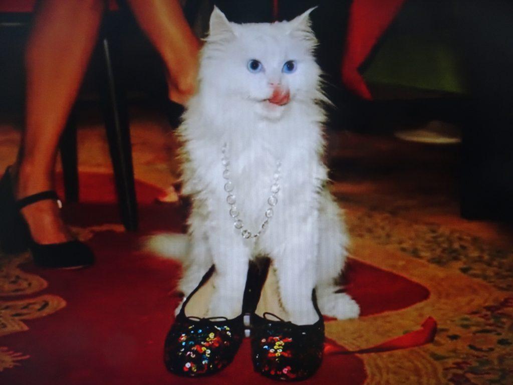 オシャレな靴を履くネコ