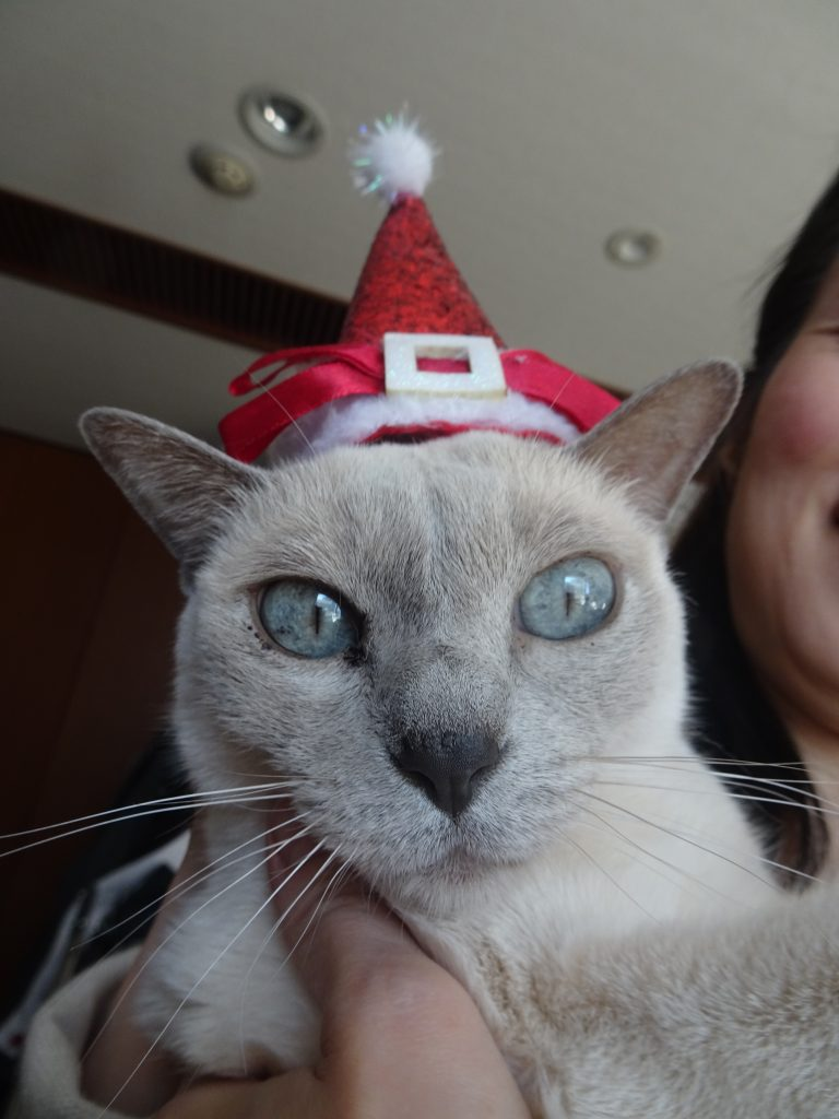 サンタの帽子をかぶる楓