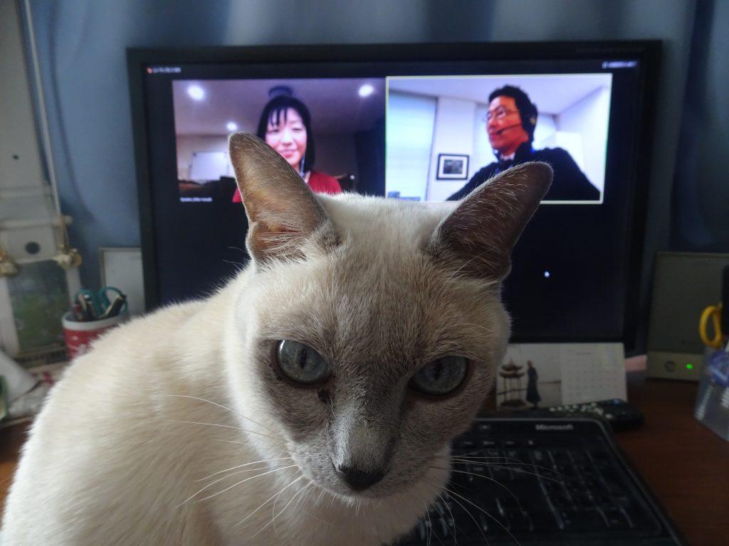 オンラインの画面を見る楓