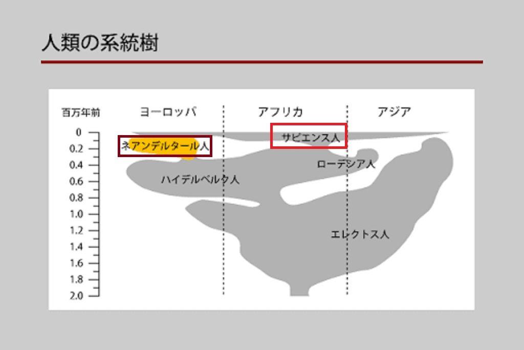 ネアンデルタール人と祖先の分離の経過を示す年表