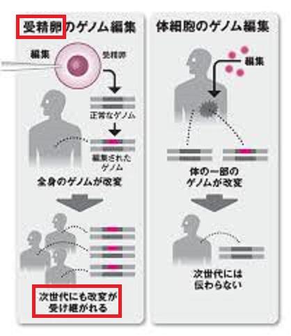 受精卵のゲノム編集の問題点を説明する図