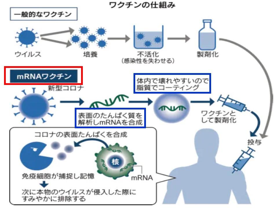 mRNAワクチンの作製 作用発現機構についてまとめた図