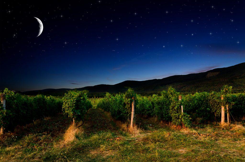 天体の動きの影響を考慮しながら決められた収穫などの農作業を行う日が示されたカレンダー