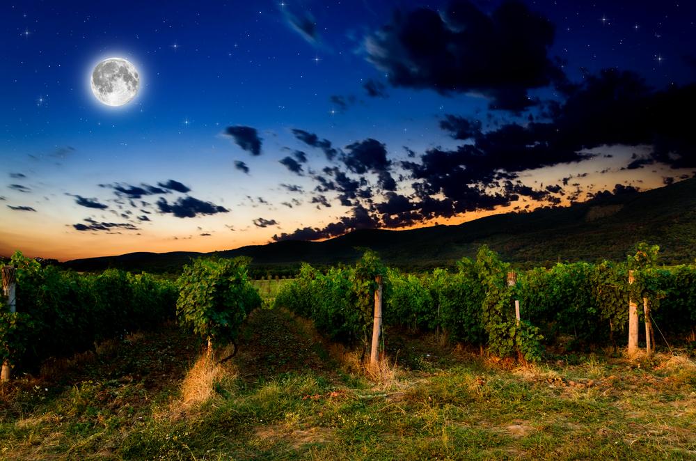満月の夜のブドウ畑