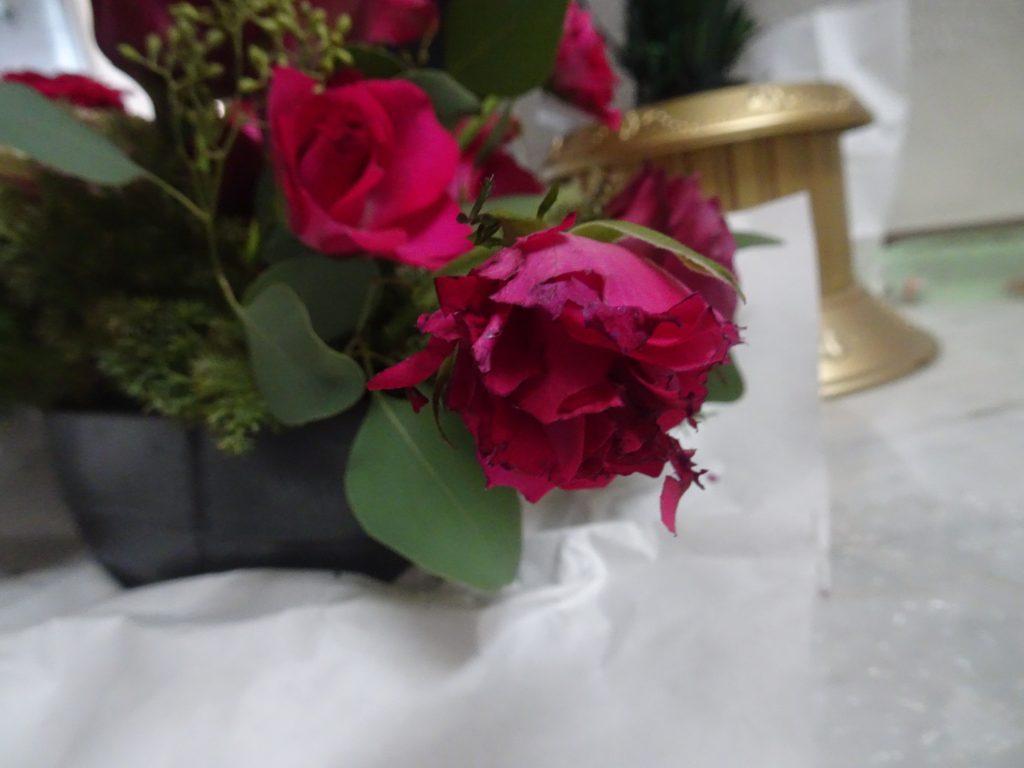 花びらが食い千切られたバラ