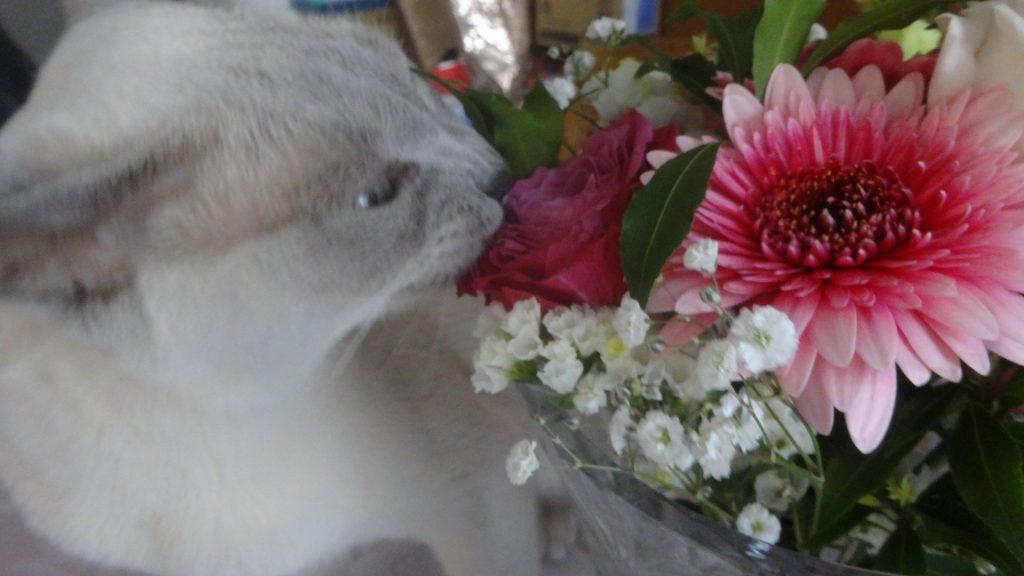 バラの花を齧る楓・1