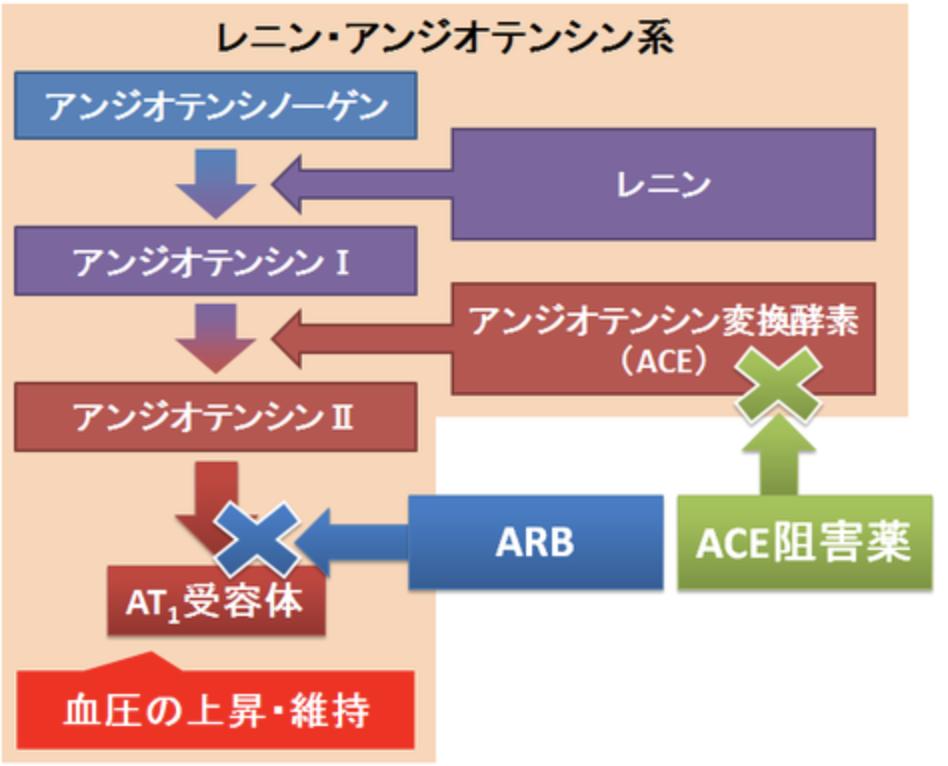 レニン・アンギオテンシン系と降圧薬の関係を示した図
