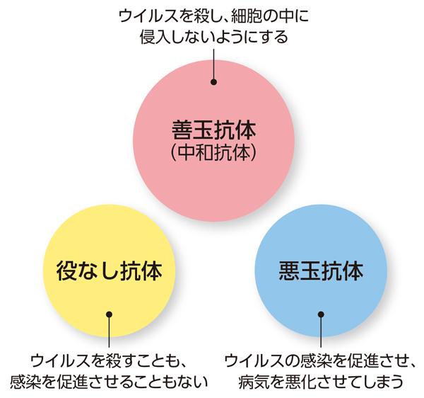 3種類の抗体について説明した図