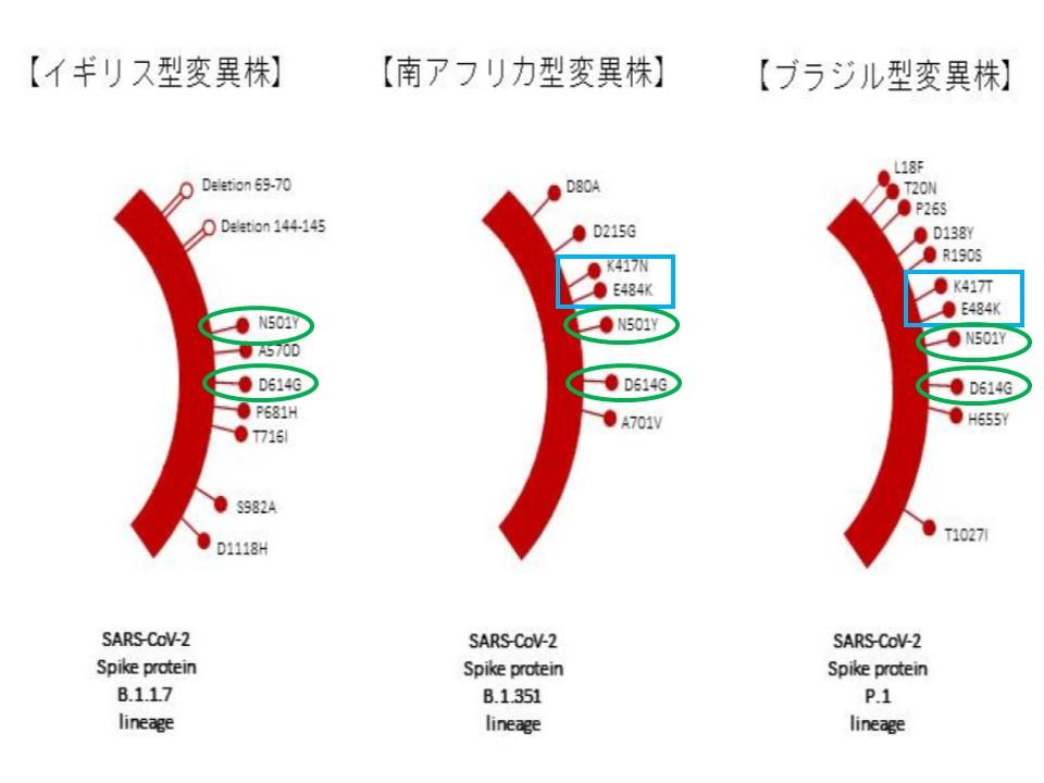 3つの変異株のスパイクタンパクでの変異を比較した図
