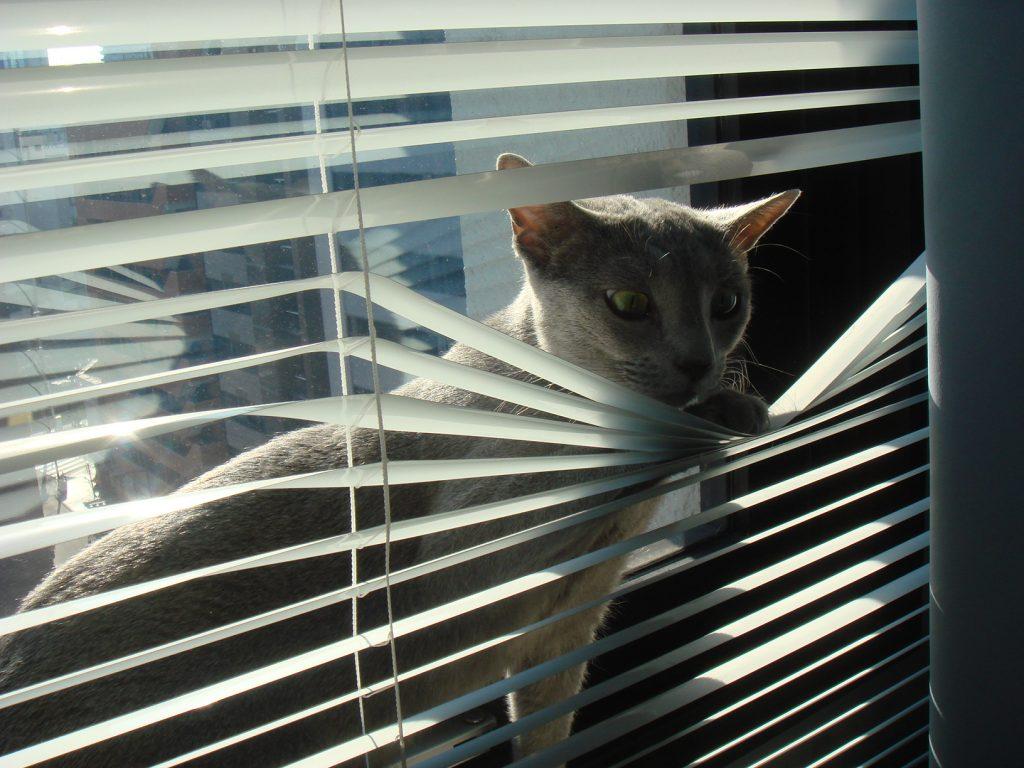 窓際で悪さをするデイジー