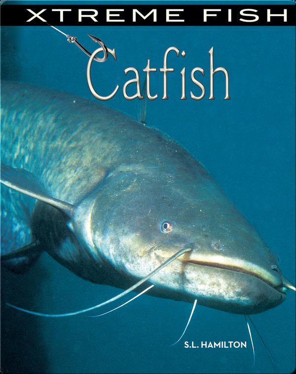 外国でCatfishと呼ばれているナマズ