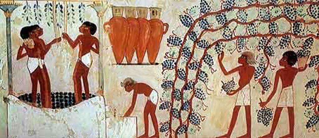 エジプトでのワイン造りの様子