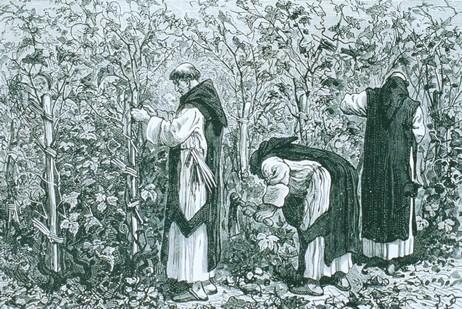 ワイン畑で働く修道士たち