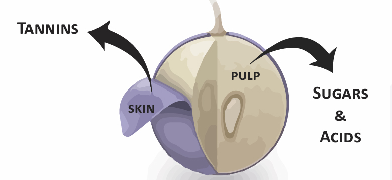 タンニンが果皮 種子に多く含まれていることを示す図