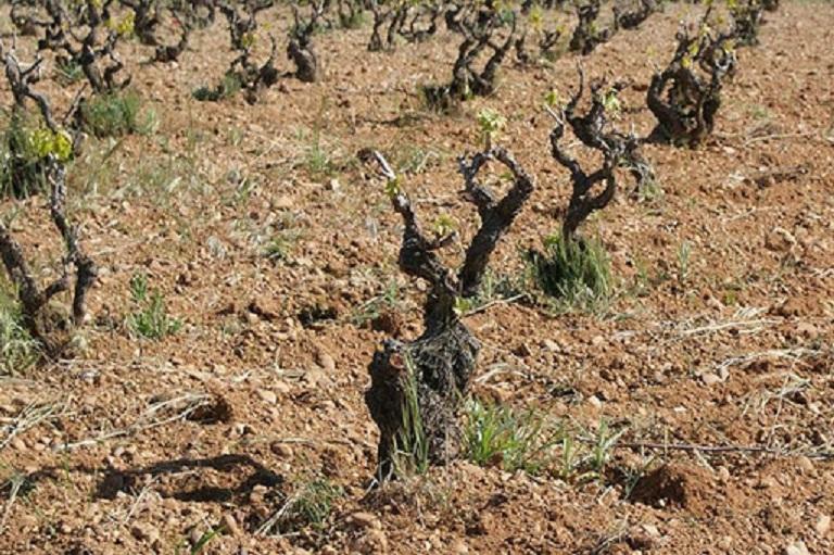 ブドウ栽培に適した土壌