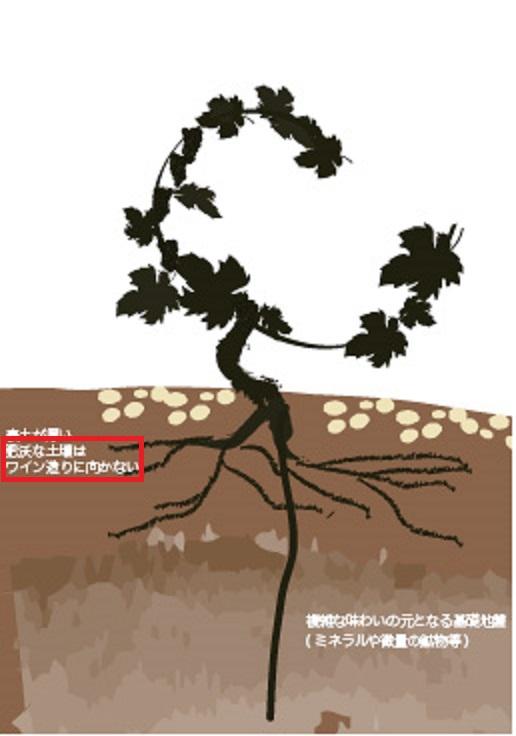 土壌の肥沃さとブドウの成熟の関連を示した図
