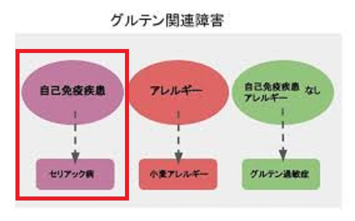 日本人には稀なセリアック病