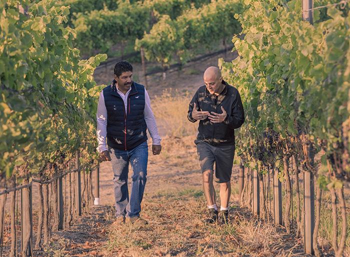 ブドウ畑を歩く醸造家