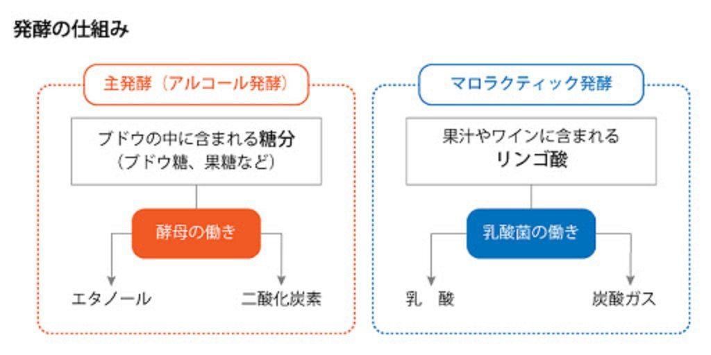 マロラクティック発酵について説明する図