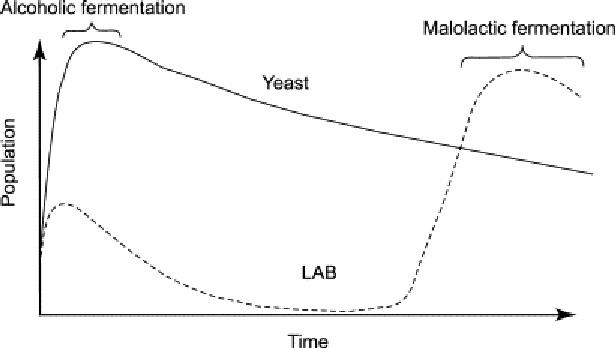 アルコール発酵後にマロラクテイック発酵が起こることを示す図