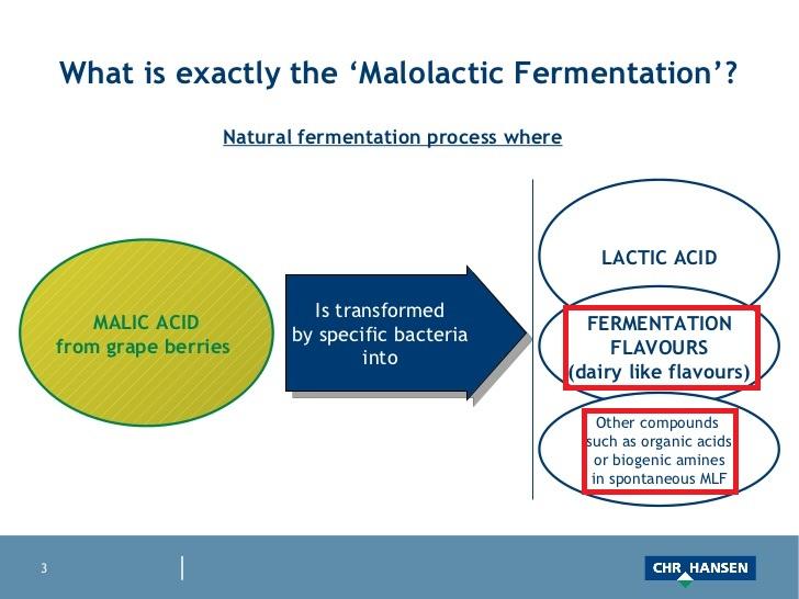 マロラクティック発酵により誘起される成分をまとめた表