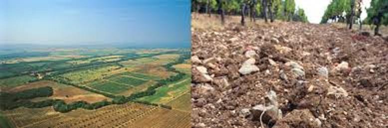 ボルゲリの小石の多い土壌