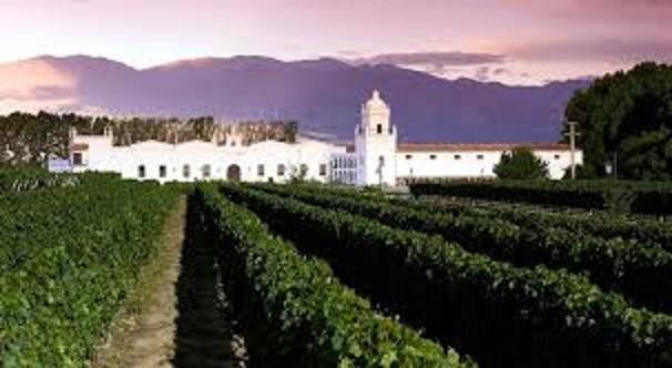 ボデガのワイン畑