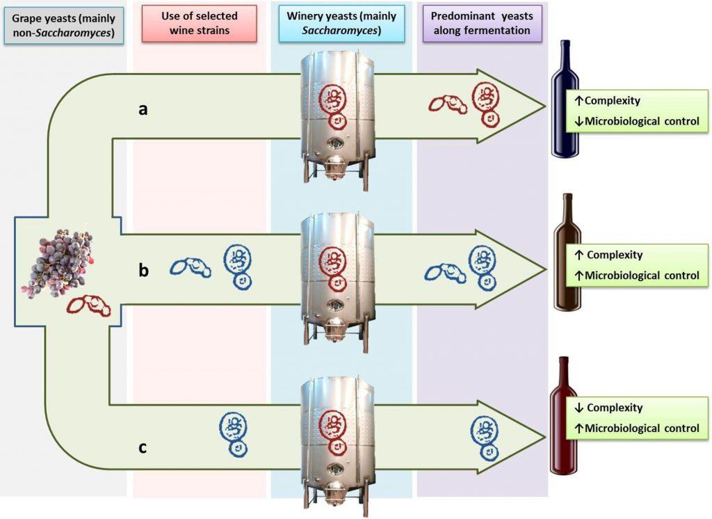 発酵の過程で優勢となる酵母の種類が変化することを示すグラフ