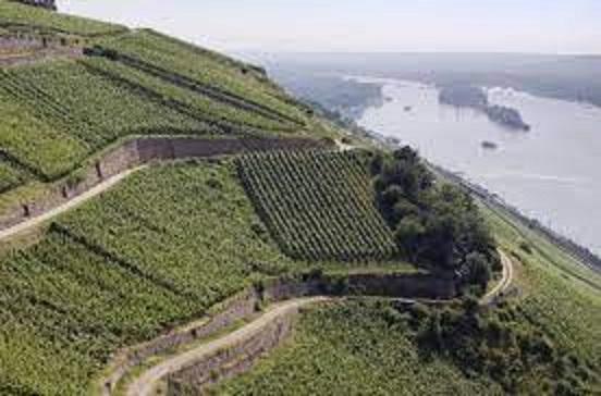 ドイツの大きな河川沿いに広がるワイン畑の様子