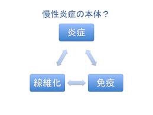 慢性炎症 病的な線維化 免疫反応の関わりを説明した図