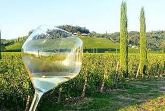 フリウリの白ワイン