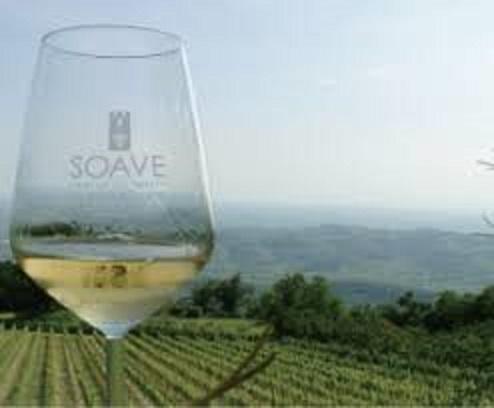 ソアヴェを栽培する畑でワインを楽しむ人々