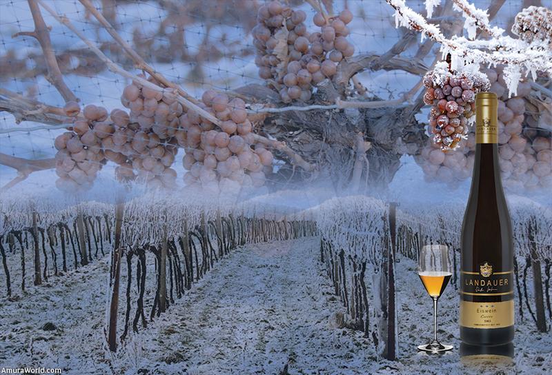 凍ったブドウ畑の風景
