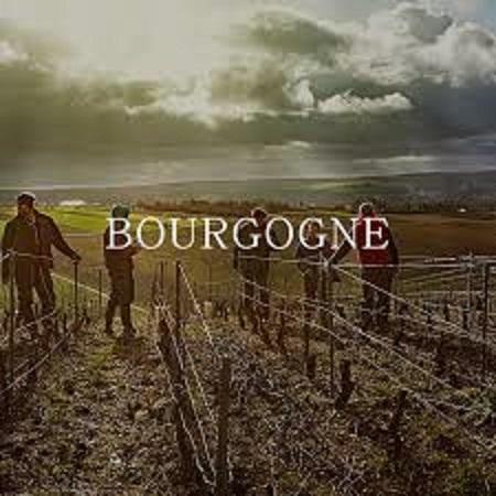 ブルゴーニュのワイン畑