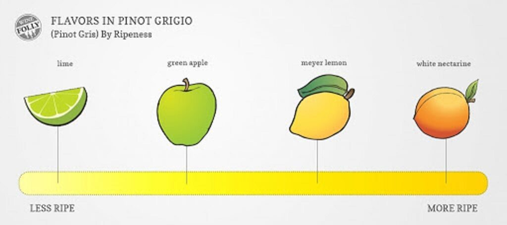 ピノ・グリの風味をまとめた図