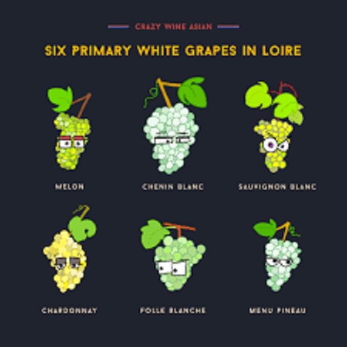ロワールで栽培されている 白ブドウをまとめた図