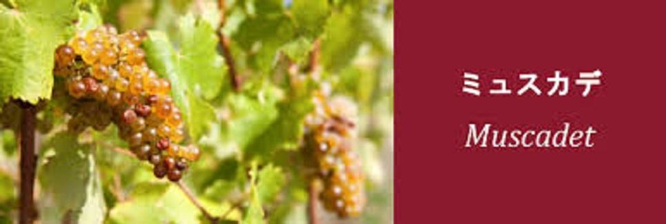 ミュスカデのブドウ