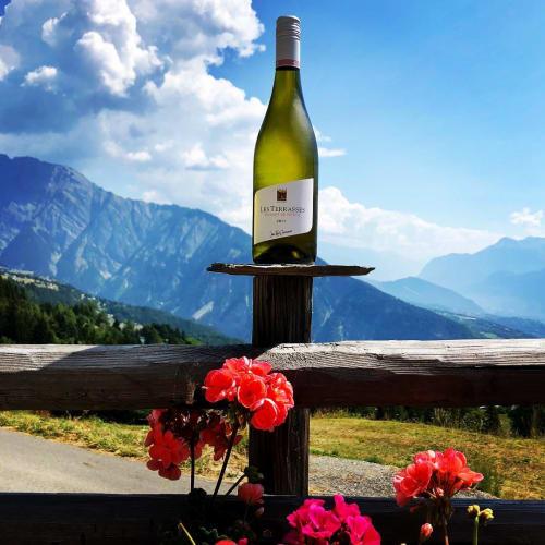 標高の高いワイン畑で働く人々