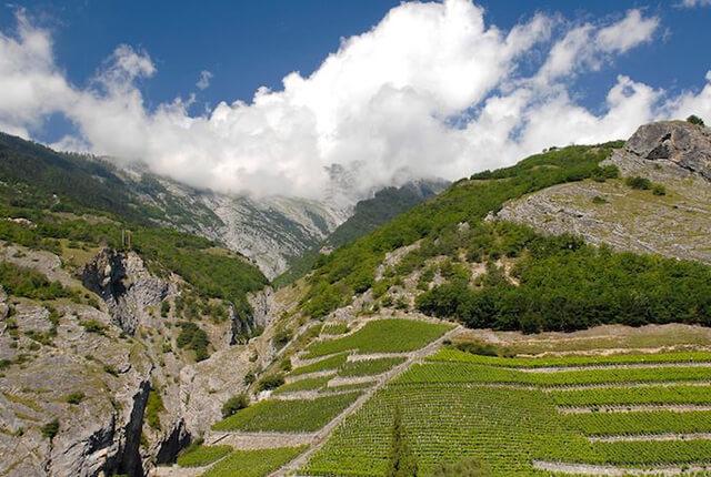 標高の高い山の斜面に広がるワイン畑